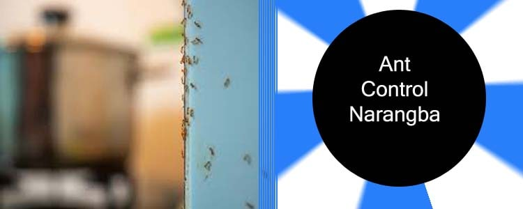 Ant Control Narangba