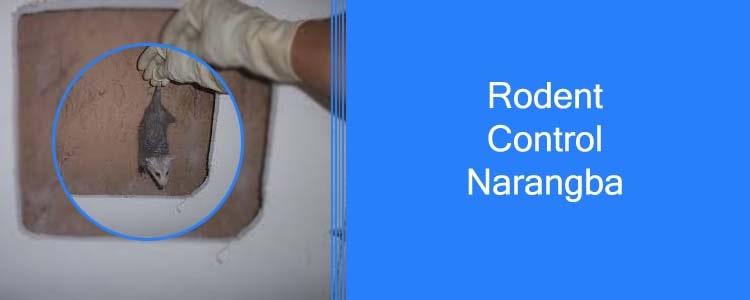 Rodent Control Narangba